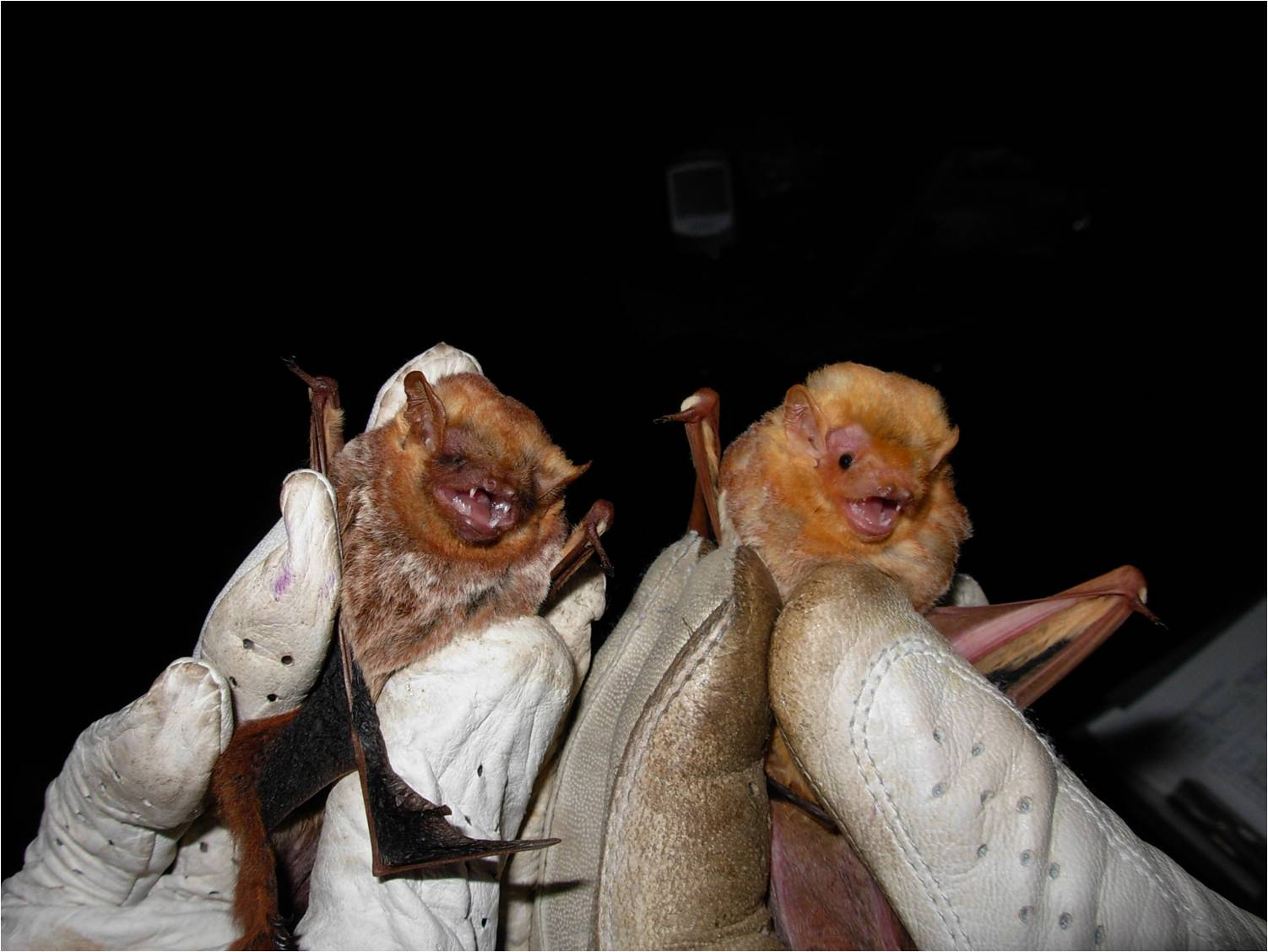 Night Moves Biologists Work To Dispel Fears Preserve
